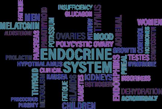Tudjon meg mindent az endokrin rendszer zavarairól